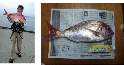 錦江湾、谷山港の堤防での真鯛の釣果